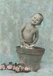 little boy in flower pot